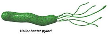 secret helicobacter pylori