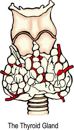 Atorvastatin Hypothyroidism Synthroid