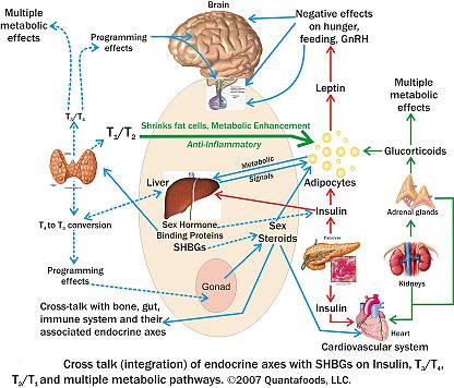testosterone medicine side effects
