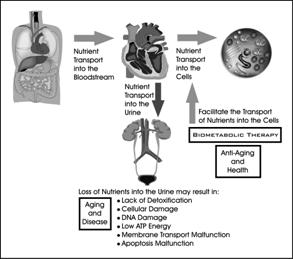 biometabolic analysis  january 2011  townsend letter for