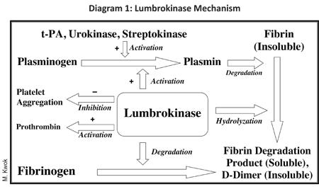 Lumbrokinase For More Than Just Circulatory Health (May 2018